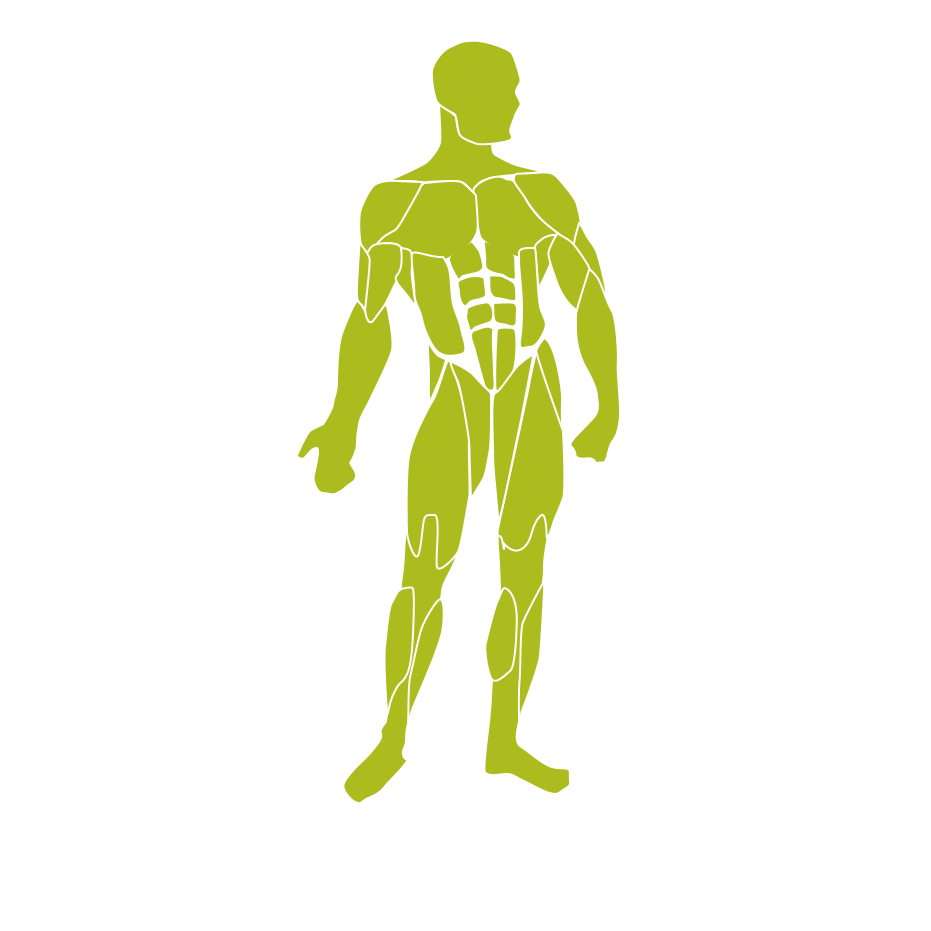A graphic illustration of a body